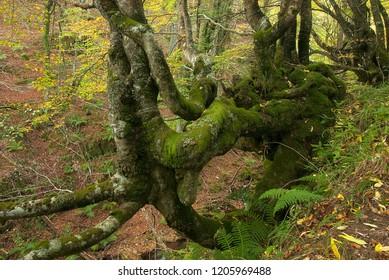 Autumn landscape, natural park Ubiñas la mesa, Asturias, Spain