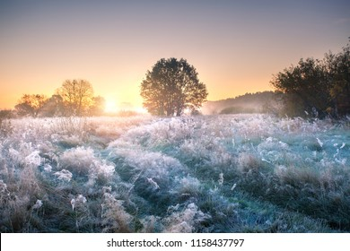 Autumn landscape. Autumn nature. Meadow covered by hoarfrost early in the morning.