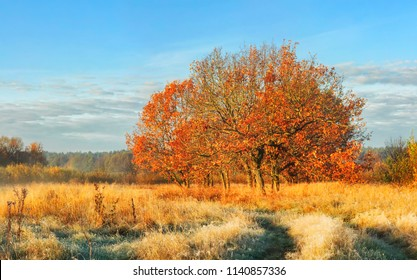 Autumn landscape of nature in october clear morning. Tree with red leaves on meadow covered yellow grass on bright sunny day. Fall. Amazing view on colorful scenic nature.