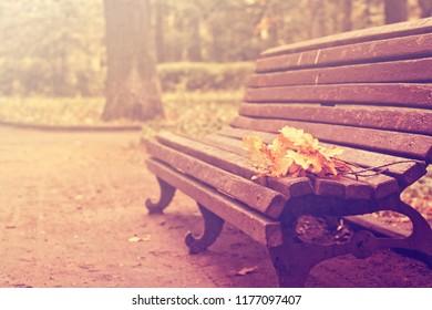 autumn landscape, oak branches lie on old bench in city park