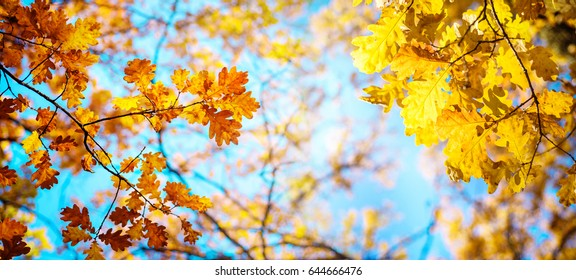 Autumn landscape. Autumn oak leafes, very shallow focus