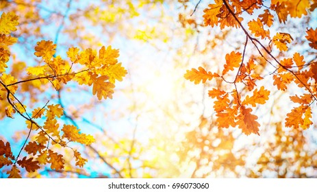 Autumn landscape. Autumn oak leafes, very shallow focus.