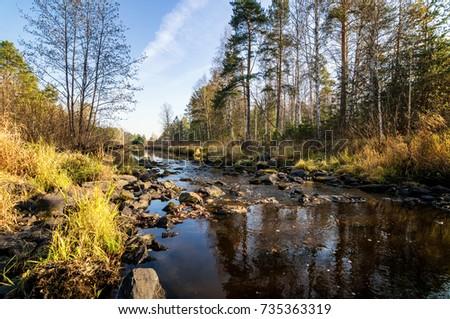 Banks forest
