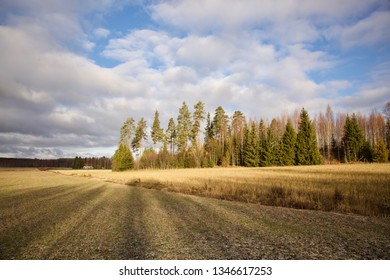Autumn landscape on a field. Sunlight hitting the ground. Fall colors.