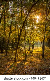 Autumn landscape on a sunset in park