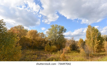autumn landscape outdoors Golden trees on a background of clouds