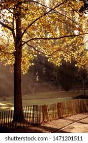 """Autumn landscape in the """"Parc de la Pepiniere"""" near The Place Stanislas in Nancy"""