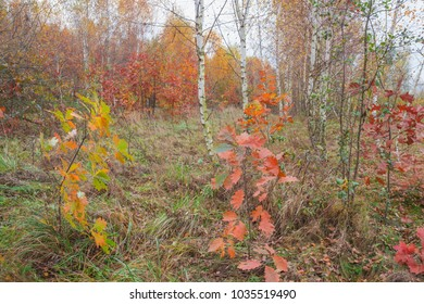 Autumn landscape in the park. Nature in the vicinity of Pruzhany, Brest region,Belarus.