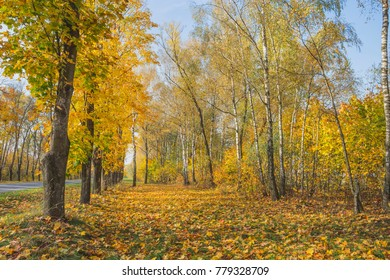 Autumn landscape in the park. Nature in the vicinity of Pruzhany, Brest region.