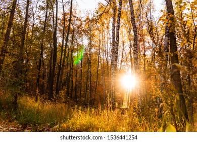 autumn landscape in the park in sunny weather