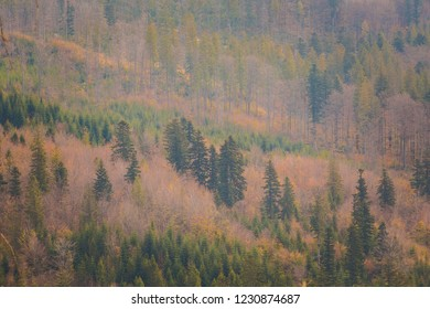 Autumn landscape photo taken in polish Beskidy mountains, Grabowa.