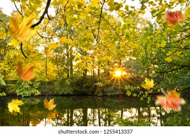 Autumn landscape with pond in the sunny day