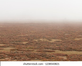 Autumn landscape with red and yellow grass and thick fog in the distance