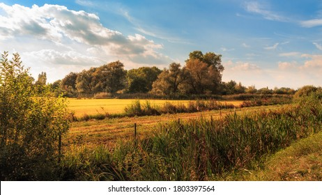 Autumn landscape with reeds, grassland and trees in the background in beautiful light under blue sky with some white clouds. Bourgoyen-Ossemeersen, Ghent, Flanders, Belgium