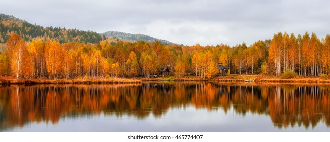 Autumn landscape Reflection in lake Birch orange forest Russia Tyelga