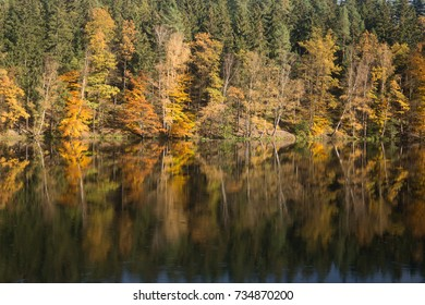 autumn landscape with river and forest