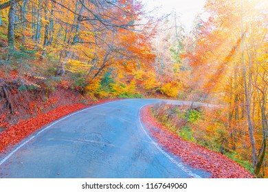 Autumn landscape with road in forest at Abant - Bolu , Turkey
