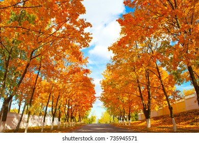 Autumn landscape. Road. Trees. Blue sky. Colors: yellow, orange, green and blue