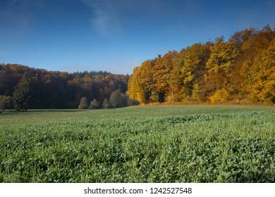 Autumn landscape at Rotzel in the Hotzenwald, Germany