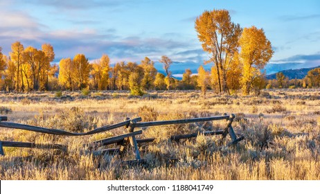 An autumn landscape scene in Jackson Hole, Wyoming, including an old style buck and rail wooden ranch fence and colorful aspen trees in early morning light.
