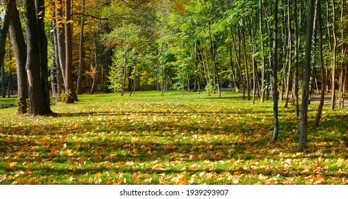 Autumn landscape of a scenic forest with lots of warm sunshine. Wide photo. - Shutterstock ID 1939293907