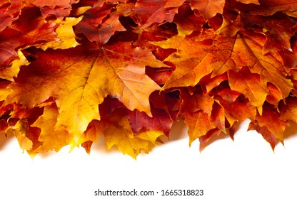 autumn landscape, sketch of autumn in the photo, yellow burgundy red leaves, summer petition, joyful pictures