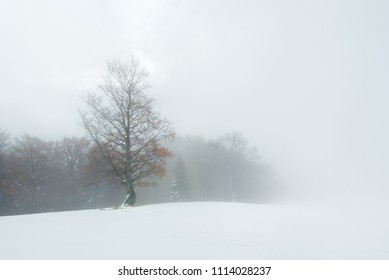 Autumn landscape with snow in the mountains. Fog in the beech forest