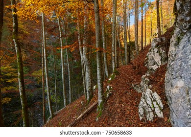 Autumn landscape with steep trail through the deciduous forest in the mountains