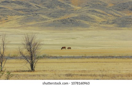 Autumn landscape, steppe with mountains. prairie, veld, veldt. a large open area of grassland, open, uncultivated country or grassland
