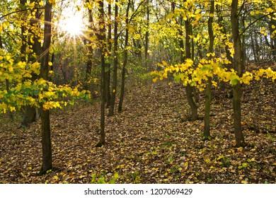 Autumn landscape with sun and sun beams