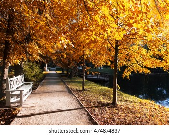 Autumn landscape with the sun warmly illumining a bench under a tree in the park