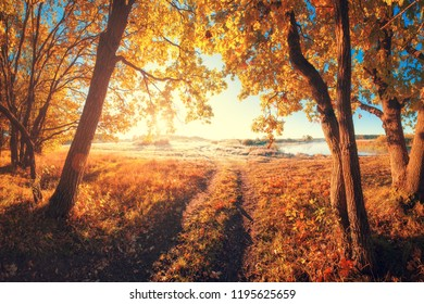 Autumn landscape. Sunny fall nature. Path in forest. Autumnal road. Autumn park.