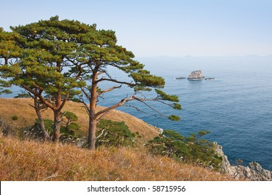 autumn landscape, a tree on the background of the sea