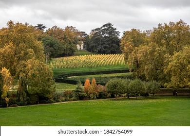 Paysage d'automne, les arbres changent de couleur, la vigne au centre devient jaune clair et le ciel est gris.