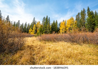 Autumn landscape with trees changing colors in an open field.