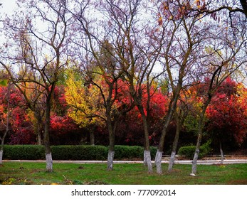 Autumn landscape, trees with orange foliage.