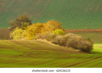 Autumn landscape with trees and waved fields of south moravia.