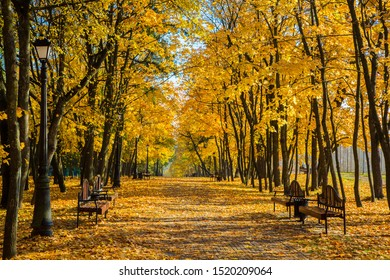 Autumn landscape trees with yellow leaves in Loschice Old park estate Minsk, Belarus, golden autumn