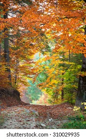 Autumn landscape, Tunnel from colorful trees growing and footpath, vertical