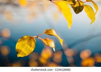 Autumn landscape with yellow leaves on a blue water background