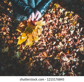 autumn landscape, yellow trees, the girl is holding a bouquet of leaves, top view