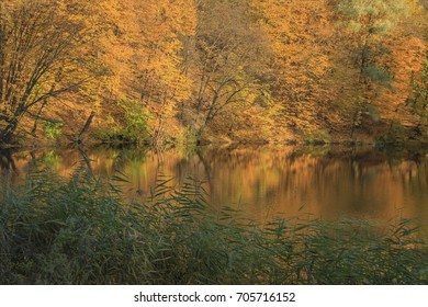 Autumn landscape - yellow trees on the lake shore