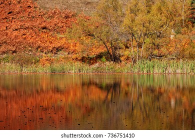 autumn landscapes on the lake