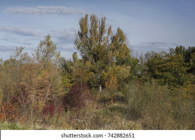 Autumn landscapes of the autumn park
