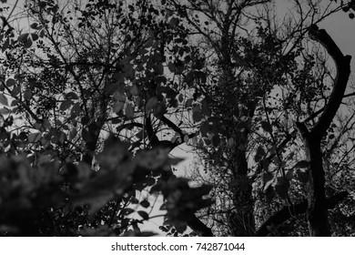 Autumn landscapes of the autumn park. Black and White