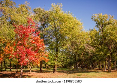Autumn landscapes - red, yellow, green leaves of trees against a blue sky