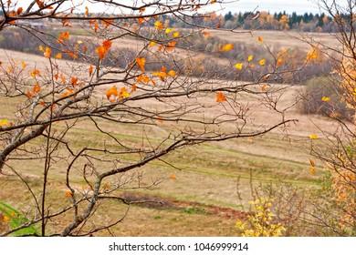 Autumn. Last leaves