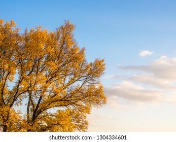 Autumn Leaders on Tree
