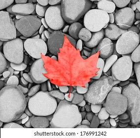 autumn leaf background sea stones  black and white  photo Canada flag