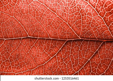 Autumn leaf with brown spots. Skeleton leaf background with details. Macro. Living Coral - Color of the Year 2019.